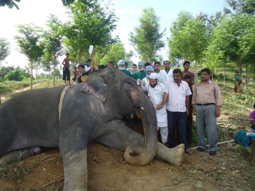 সার্কাসের হাতি-ই হোক, বা অন্য বন্য প্রাণি হোক, এখানে তার জন্যও রয়েছে চিকিৎসা